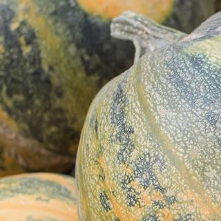 Organic Pumpkin Seed Nutri-Powder
