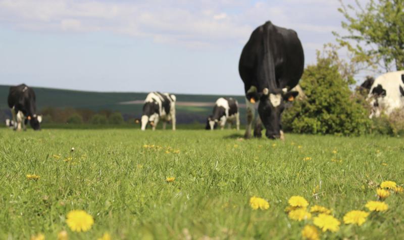 Liquid milk - Ingredia Dairy Experts
