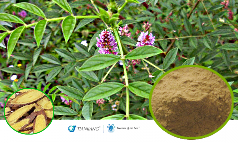 Licorice Pure Extract - Gan Cao: Treasure of the East Herbs, Distributor of Granule Chinese Herbs made by TianJiang pharmaceutical