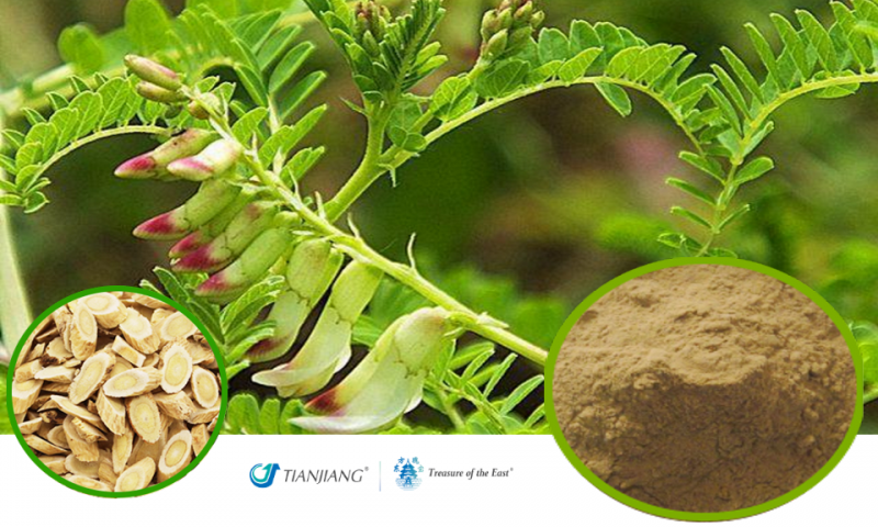 Astragalus Pure Extract - Huang Qi: Treasure of the East Herbs, Distributor of Granule Chinese Herbs made by TianJiang pharmaceutical
