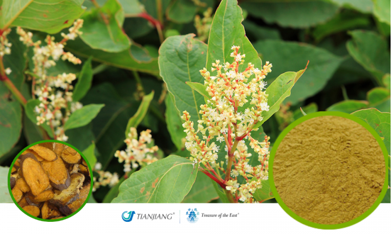 Bushy Knotweed Root Pure Extract - Hu Zhang: Treasure of the East Herbs, Distributor of Granule Chinese Herbs made by TianJiang pharmaceutical