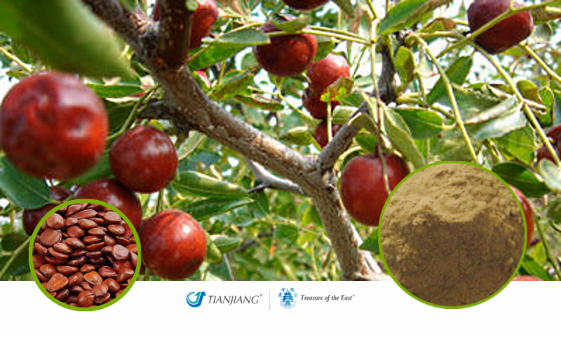 Spiny Jujube Seeds Pure Extract - Suan Zao Ren: Treasure of the East Herbs, Distributor of Granule Chinese Herbs made by TianJiang pharmaceutical
