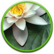 Gellan Gum Producer | Gelling Agent | CP Kelco
