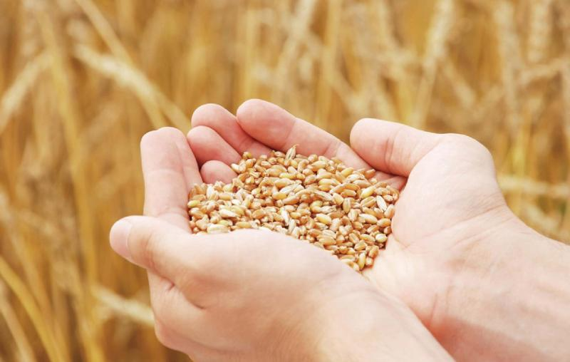 Wheat Oligopeptide – smartpep