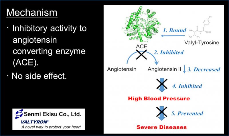 Mechanism how VALTYRON decreases blood pressure