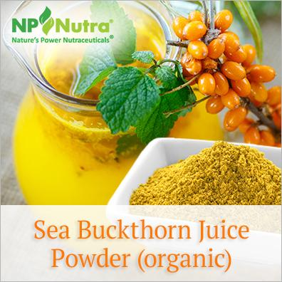 Sea Buckthorn Juice Powder (organic) - Nutra Organics