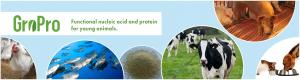 Fubon, feed yeasts and solutions for animal nutrition - Angel Yeast