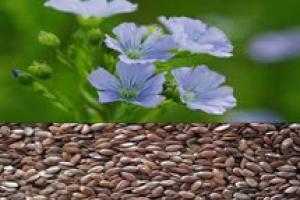 Flax Seed Extract  - Xi'an ACETAR BIO - TECH INC.
