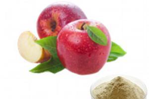 Apple Fruit Juice Powder_Ginkgo Biloba Extract Green Tea Extract Aloe Vera gel freeze dried powder Plant extract Botanical extract