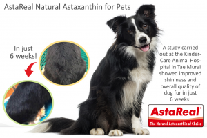 Natural AstaReal astaxanthin for pet supplements and pet foods