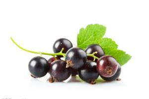 Blackcurrant Extract-Botanical Extracts-Auropure LifeScience Co., Ltd.