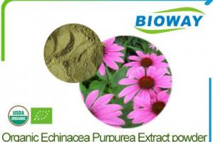 China Organic Echinacea Purpurea Extract Powder Manufacturers, Suppliers and Factory - Wholesale Products - Bioway (Xi'An) Organic Ingredients Co.,Ltd
