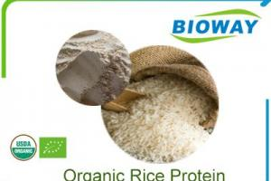 China Organic Rice Protein Manufacturers, Suppliers and Factory - Wholesale Products - Bioway (Xi'An) Organic Ingredients Co.,Ltd