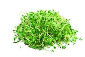 Alfalfa Leaf Medicago Sativa (Alfalfa) Leaf Extract - Bio Botanica