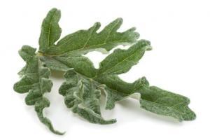Artichoke Leaf Cynara Scolymus (Artichoke) Leaf Extract - Bio Botanica