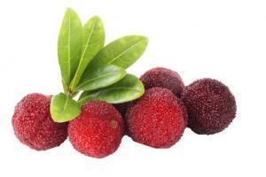 Bayberry Bark Myrica Cerifera (Bayberry) Bark Extract - Bio Botanica