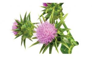 Blessed Thistle Herb Carbenia Benedicta Extract - Bio Botanica