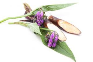 Boneset Herb Eupatorium Purpureum Flower/Leaf/Stem Extract - Bio Botanica