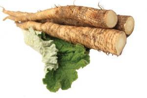 Burdock Root Arctium Lappa Root Extract - Bio Botanica