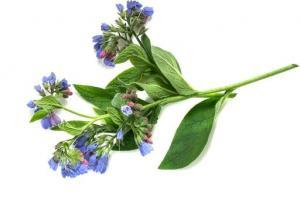 Comfrey Leaf Symphytum Officinale Leaf Extract - Bio Botanica