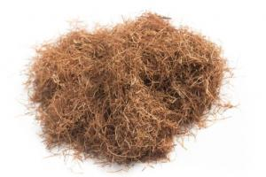 Cornsilk Zea Mays (Corn) Silk Extract - Bio Botanica