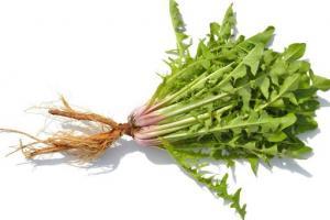 Dandelion Root Taraxacum Officinale (Dandelion) Root Extract - Bio Botanica