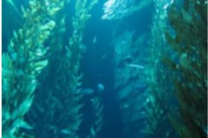 Brown Seaweed Extract Fucoidan