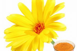 Marigold Extract-Changsha Zhongren Biotechnology Co., Ltd.