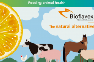 Animal Health & Nutrition | Ferrer Corporate