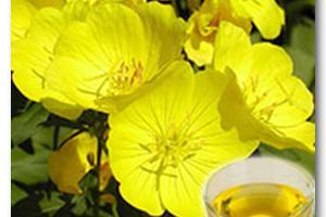 Healthy Oils, Plant Extracts - JILIN BAILI BIOTECHNOLOGY CO., LTD