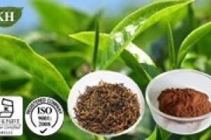 Black Tea Extract - KINGHERBS LIMITED