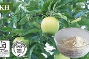 Apple extract 80% polyphenol - KINGHERBS LIMITED