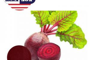Beet Extract Manufacturer & Suppliers & Distributor - Wholesale Bulk Beet Extract for Sale from Factory - MAXSUN