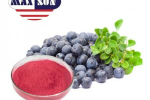 Blueberry Powder Manufacturer & Suppliers & Distributor - Wholesale Bulk Blueberry Powder for Sale from Factory - MAXSUN