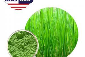 Organic Barley Grass Juice Powder Manufacturer & Suppliers & Distributor - Wholesale Bulk Organic Barley Grass Juice Powder for Sale from Factory - MAXSUN