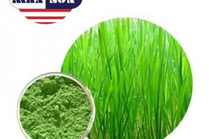 Organic Barley Grass Juice Powder Manufacturer & Suppliers & Distributor - Wholesale Bulk Organic Barley Grass Juice Powder for Sale from Factory - MAXSUN