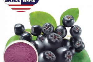 Wild Cherry Berry Powder Manufacturer & Suppliers & Distributor - Wholesale Bulk Wild Cherry Berry Powder for Sale from Factory - MAXSUN
