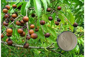 Soap Nut Extract_Plant Extract,Plant Extracts Innovator,Naturalin Bio-Resources Co., Ltd