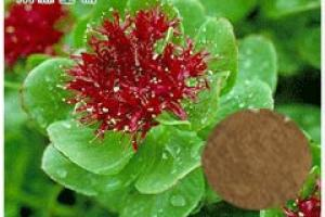 Rhodiola Extract_Plant Extract,Plant Extracts Innovator,Naturalin Bio-Resources Co., Ltd