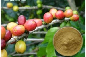 Green Coffee Bean Extract_Plant Extract,Plant Extracts Innovator,Naturalin Bio-Resources Co., Ltd