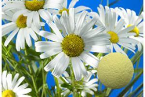 Chamomile Extract_Plant Extract,Plant Extracts Innovator,Naturalin Bio-Resources Co., Ltd