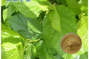 Mulberry Leaf Extract_Plant Extract,Plant Extracts Innovator,Naturalin Bio-Resources Co., Ltd