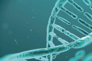 Nucleotides60%: The immunity bodyguard