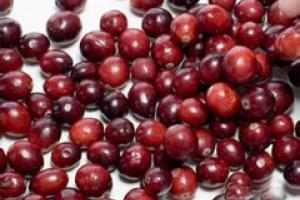 Cranberry Extract_Ningbo Beilun Excare Pharma-Tech Co.,Ltd
