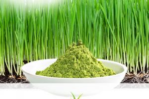 NutraGrass™ (Organic Wheat Grass Juice Powder)