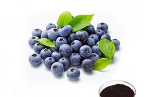 Bilberry Extract - Plant Extract - botanical extracts suppliers - Organic Herb Inc