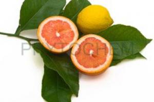 Citrus Bioflavonoids 15%, 80%, 90%