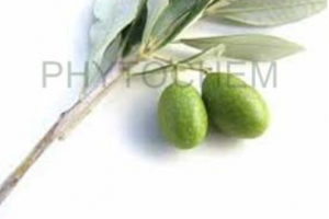 Olive Leaf Extract 15% - 40%