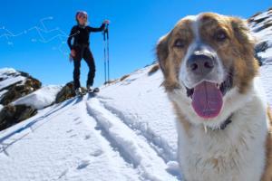 Animal Health | Primex