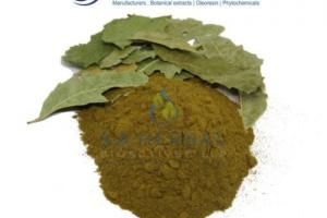 Azadirachta Indica Extract - Standardized Botanical Extracts Manufacturer